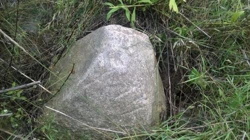 - Żółwin.pl
