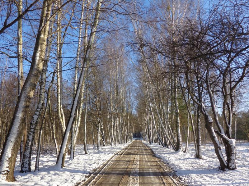 Nadarzyńska w zimowej szacie
