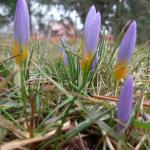 Wiosna na Nadarzyńskiej